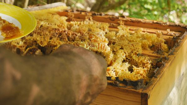 Maré récolte miel