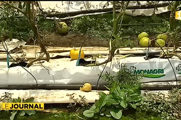 Pénurie de légumes et récoltes compromises à Tahiti et Moorea