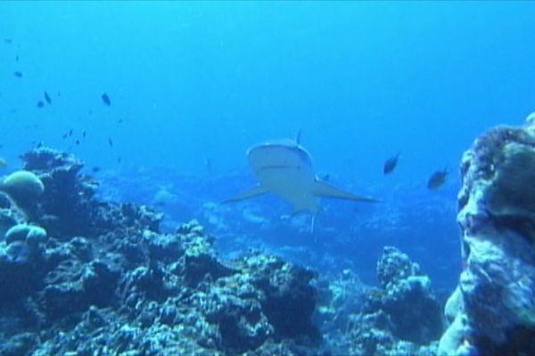 Attaques requins NC