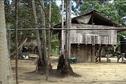 Dossier : les Wayanas d'Antecume Pata