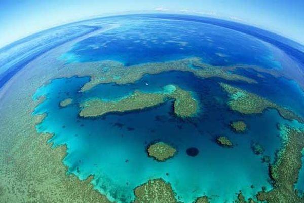93 % des récif de la grande barrière victimes de blanchiment