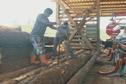 Tubuai développe le marché de la sylviculture