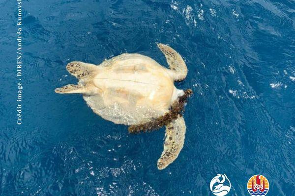 Braconnage des tortues : le massacre continue