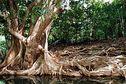 Guadeloupe 2014 : la conférence environnementale au sommet