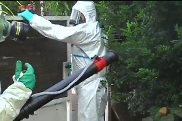 Dengue démoustication