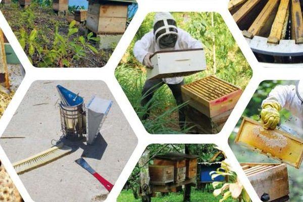 Mémento de l'apiculteur