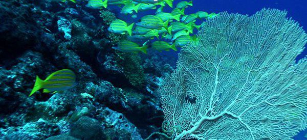 La nuit du corail - Défis Océan
