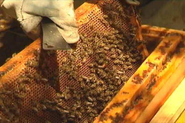 Médaille d'or pour le miel de Ronald Daclinat et sa miellerie Maniba