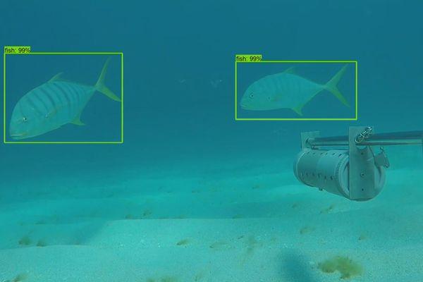 intelligence artificielle poissons IRD
