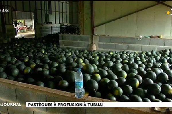 La saison des pastèques bat son plein à Tubuai