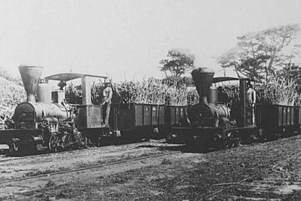 Trains de canne à sucre
