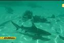 Bora Bora : un enfant mordu par un requin pointe noire