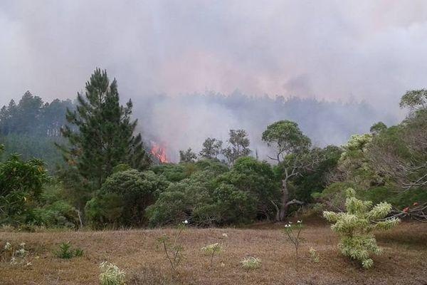 incendie : île des Pins
