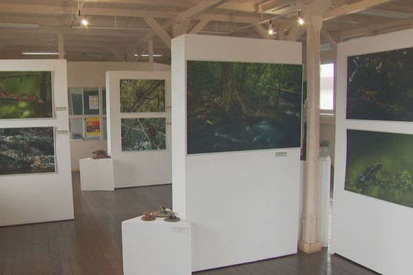 Exposition au centre Pagaret : Le patrimoine naturel de la réserve Trésor