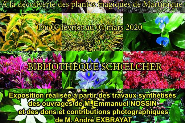 Exposition plantes