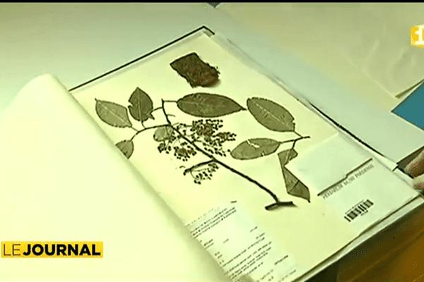 Le grand herbier du Museum d'histoire naturelle en version numérique