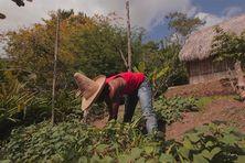 Gilbert Larose dans son jardin créole