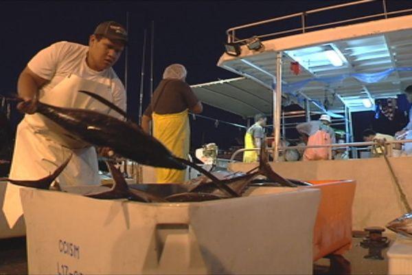 Les sociétés d'export de thon frais du Fenua veulent doubler la production