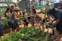 La ferme du lycée agricole de Vaimoana ouvre ses portes aux visiteurs