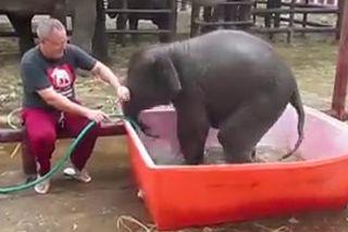 éléphanteau dans son bain