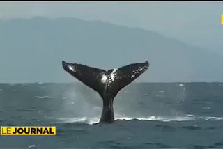 Observer les baleines tout en les respectant
