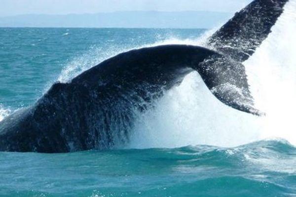 20150711 Festival des baleines