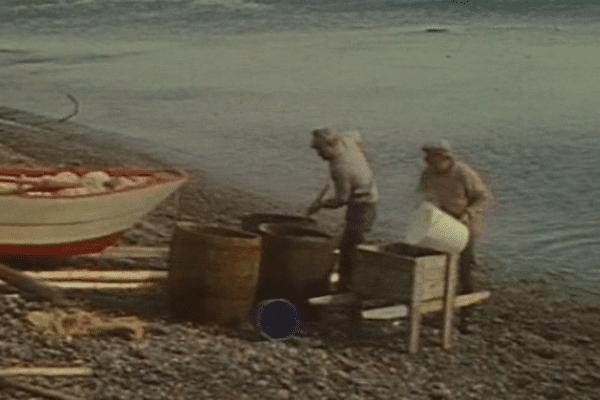 peche capelan Miquelon 1974