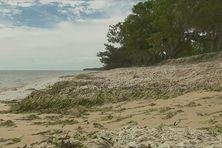Le littoral de Poe touché par une marée d'algues vertes en janvier 2018
