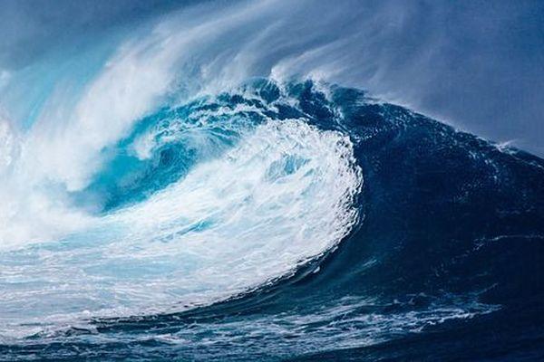 L'ONU entend préserver la bio diversité en haute mer
