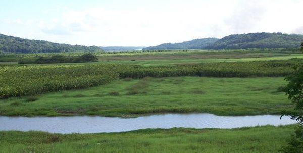 Les marais de Kaw Guyane