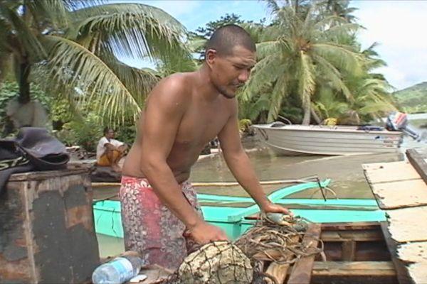 Mataari'i pêcheur de crabes Huahine