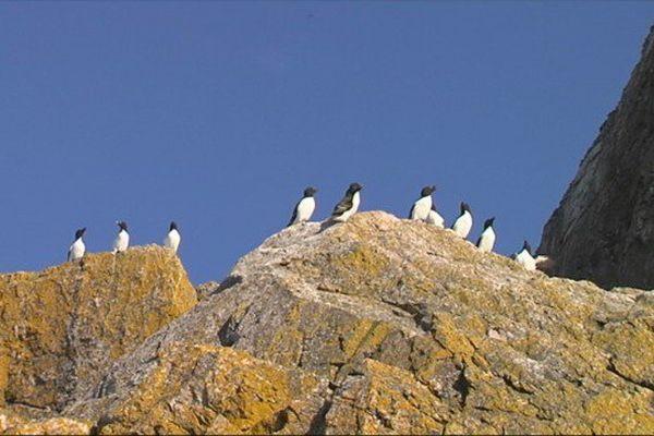 Comptage oiseaux Grand Colombier