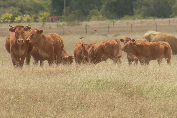 La période de sécheresse pourrait débuter dès la fin de semaine selon certaines prévisions.