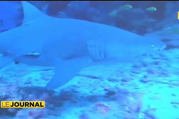 Les requins sont en danger