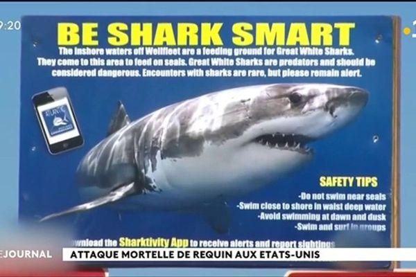 Rarissime attaque mortelle de requin sur la côte est américaine