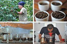 De la cerise à la dégustation, le café étape par étape.