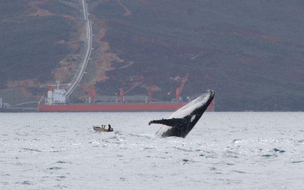La plate et la baleine, 1er août 2019