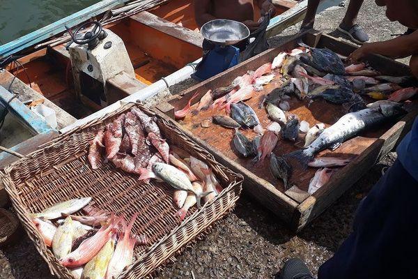 marché aux poissons dans le port de Deshaies
