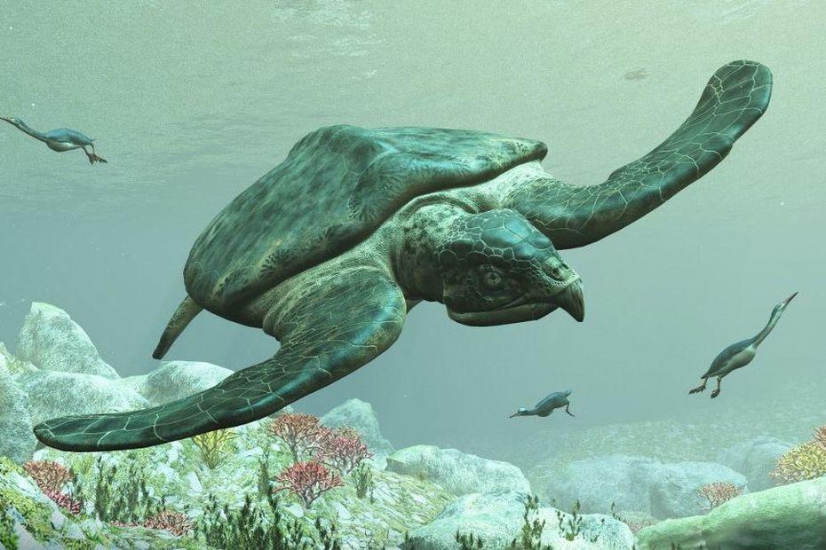 Des tortues géantes vivaient dans le Nord de l'Amérique du Sud, notamment en Amazonie - Outre-mer la 1ère