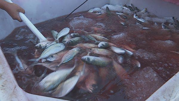 Vente poissons Faa'a