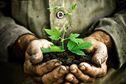 Guyane la 1ère propose une programmation spéciale pour la Semaine de l'Agriculture