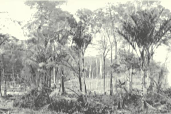 Le terrain donné par la colonie pour accueillir les pierrotains