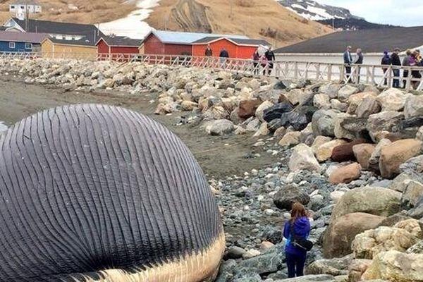 Baleine explosé canada