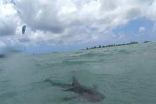 Requin dans le lagon de Maurice