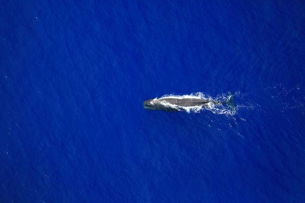espèce marines rares au large de La Réunion