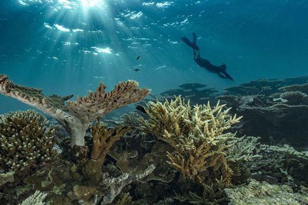 Récif corallien en Polynésie.