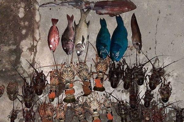 braconnage saisie 20 kg pêche illégale réserve marine 281119