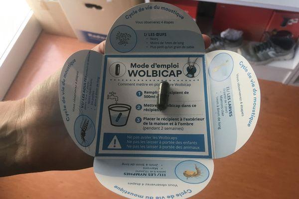 Projet Wolbachia 1 an après :  la moitié des moustiques serait aujourd'hui porteuse de la bactérie