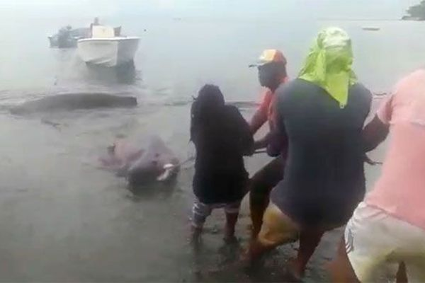 capture de requins