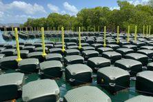 Des centaines de cubes en plastique devraient former le barrage de protection contre les algues sargasses.